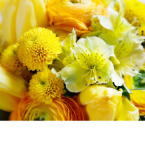 Florist's Choice in yellow